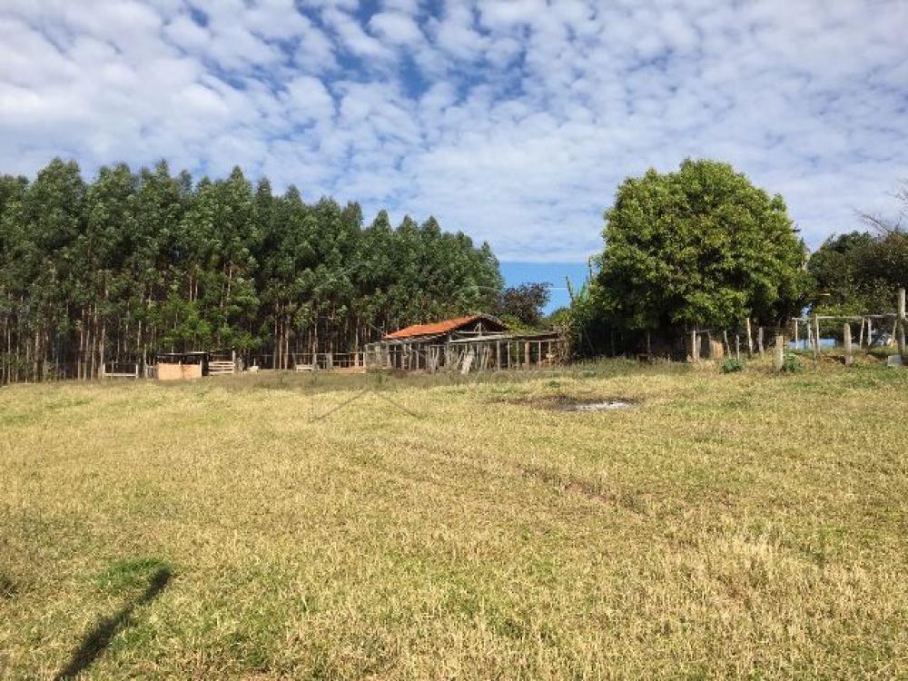 Comprar Rural / Sítio em Botucatu R$ 690.000,00 - Foto 8