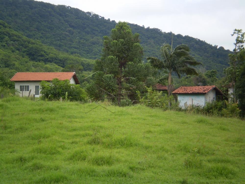 Comprar Rural / Sítio em Botucatu R$ 2.200.000,00 - Foto 4