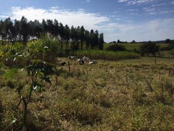 Comprar Rural / Sítio em Botucatu R$ 690.000,00 - Foto 9